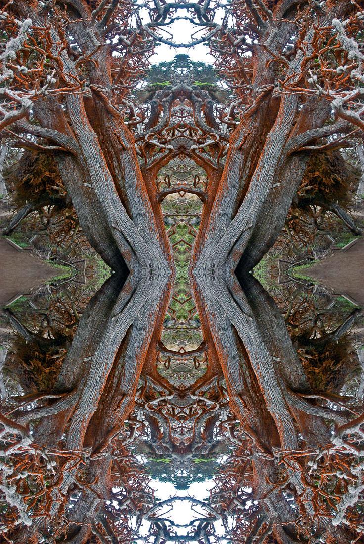 4 Point Lobos Medusa
