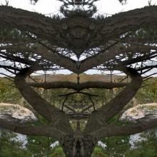 2 Point Lobos Eagle Arch 1